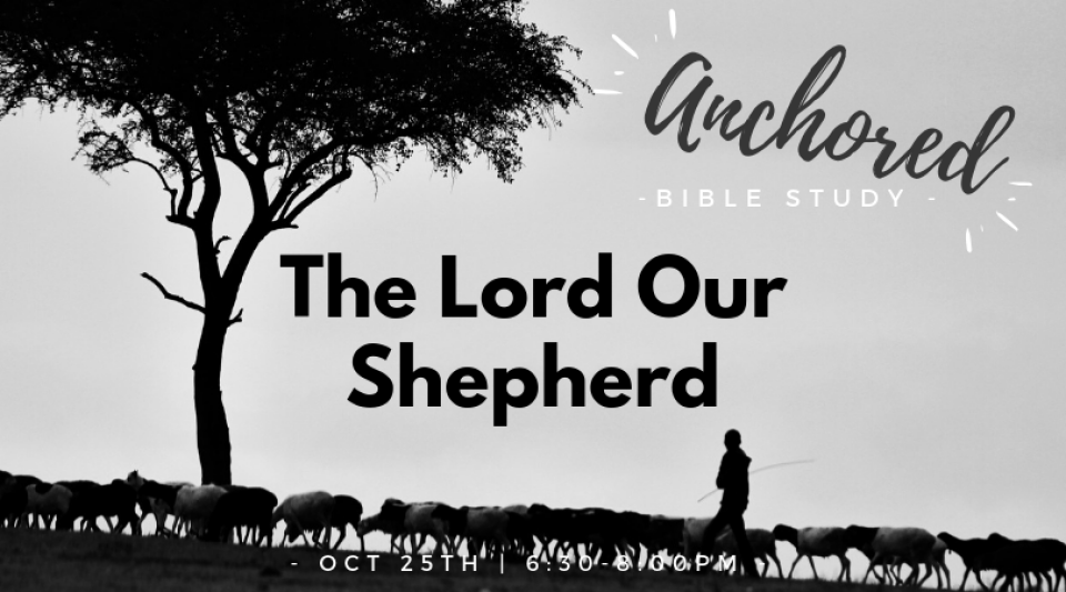 Anchored Women's Bible Study